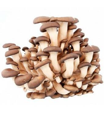 Міцелій грибів глива замовити недорого