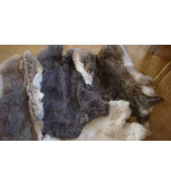 Куплюшкурки кролика Украина