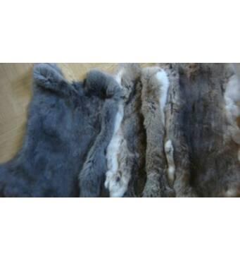 Куплю шкурки кролика