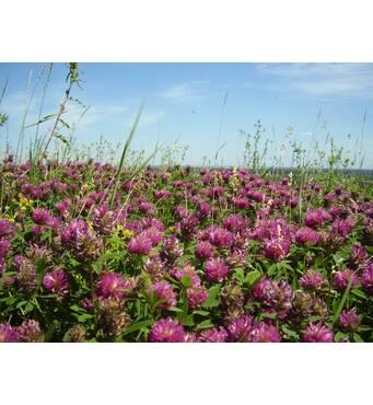 Многолетние медоносные травы приобрести по доступной цене
