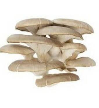 Купити міцелій гливи для вирощування грибів