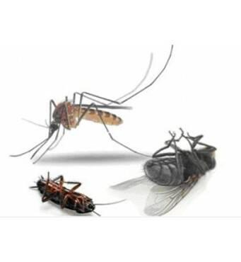 Профессиональное уничтожение насекомых проводит ЧП Крес!