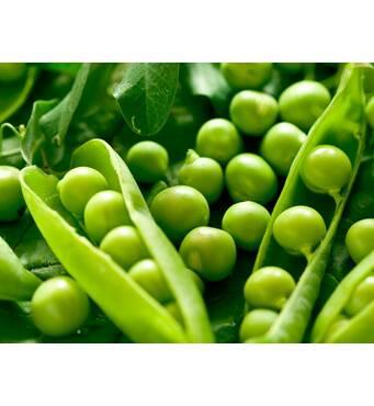 """Купити горох посівний пропонуємо у господарстві """"МТД""""."""