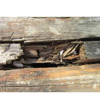 Качественная и доступная борьба с вредителями древесины в Украине — в ЧП Крес!