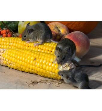 """Швидку та якісну дезінсекцію на харчових підприємствах довірте компанії """"Крес""""."""