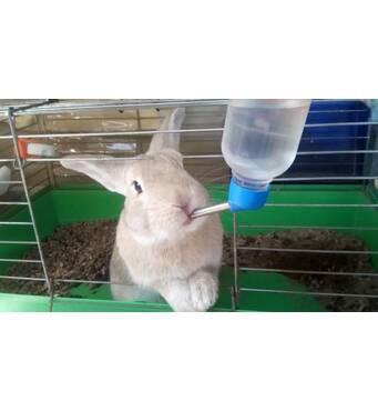 Купити поїлки для кроликів хорошої якості