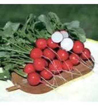 Вкусная редис сорта Рудольф снова доступна для заказа