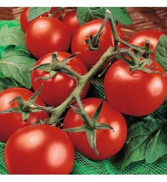 Профессиональное семян вкусных томатов доступно для заказа