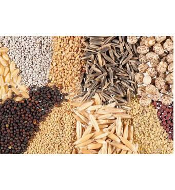 Пропонуємо замовити різноманітне насіння високої якості поштою