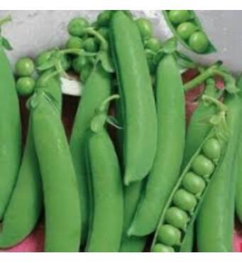 Семена Горох Овощное чудо