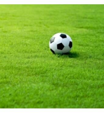 Ищете, где купить спортивный газон? Вам сюда!