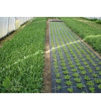 Пропонуємо купити агроволокно. Доставка по всій Україні