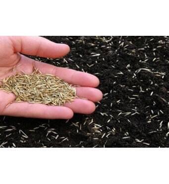 Насіння газонної трави - ціни конкурентні в Україні. Поставка із Запоріжжя