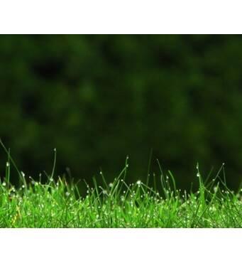 Сертифіковане насіння газонної трави, Україна: широкий вибір!
