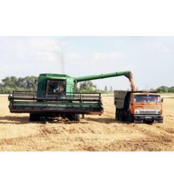 Якісний збір зернових: жито, пшениця, ячмінь у Хмельницькій області