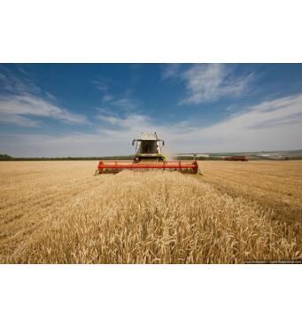 Сбор урожая пшеницы: профессионально и доступно!