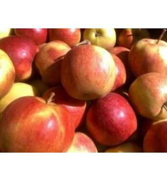 Яблука Лігол на експорт
