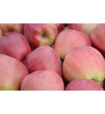 Яблука Глостер на експорт