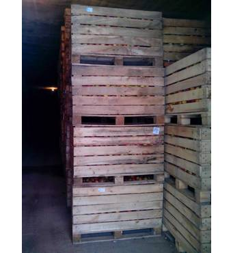 Яблука осінні на експорт