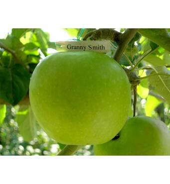 Яблука Гренні Сміт