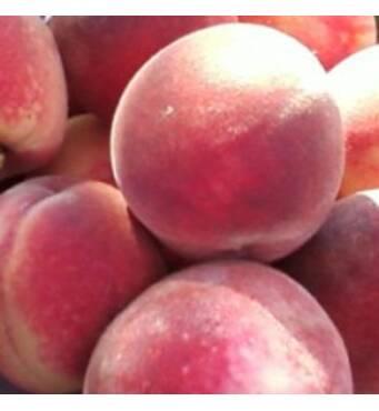 Саженцы персика - Щедрый