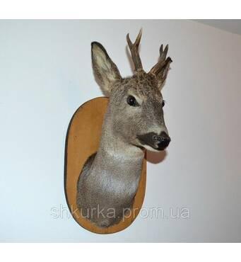 Голова (опудало) оленя на стіну