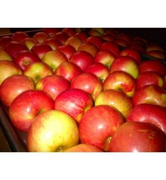 Яблука сорту Чемпіон