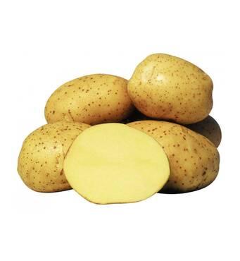 Картофель Агата