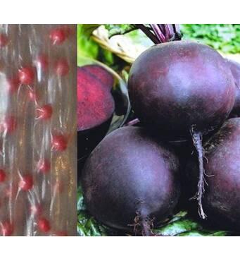 Дражированные семена на ленте Свекла Бона (ЕБР-25) за 5 м/уп.