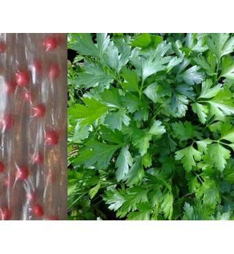 Дражоване насіння на стрічці Петрушка листова Гігантела (ЕПШ-14 )