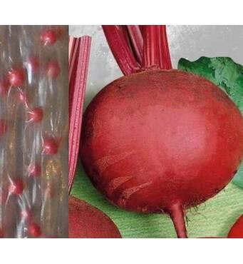 Дражоване насіння на стрічці Буряк Детройт (ЕБР-26) за 5м/уп.