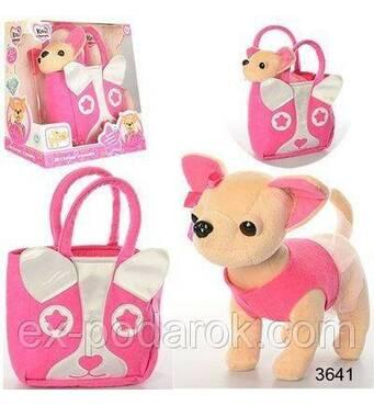 Собачка в сумочці Кикки аналог Chi Chi Love Чіхуахуа музична.