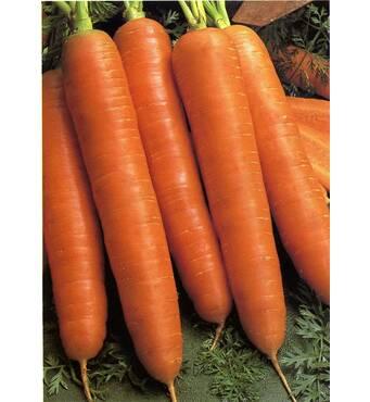 Морква Королева осені (ЕМР-46) за 5 м/уп.