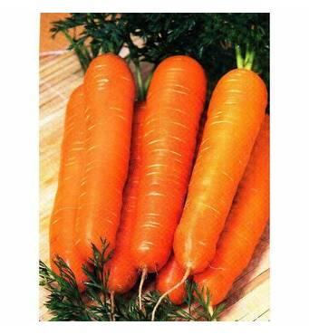 Морковь Красный гигант за 2 г