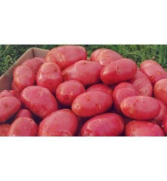 Картофель Инфинити 3 кг сетка