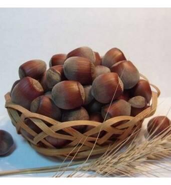 Саджанці фундука сорт Подарунок Юннатом