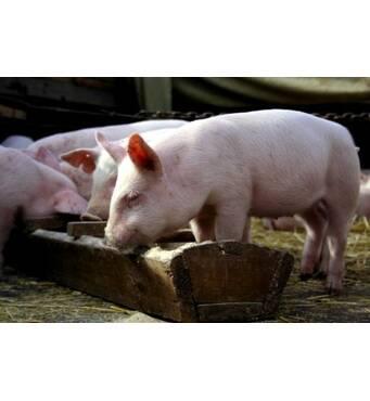 Комбикорм для свиней (гровер)