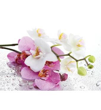 """Пакет для подарунка гігант горизонтальний """"Гілочка орхідеї"""" 46 х 33 см   (6 шт/уп)"""