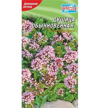 Семена душици обычная (Душица) 300 шт.