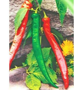 Семена перца горького Каенский (Герм)