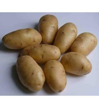 Картофель Сингаевка по 6 кг (ІКР-159-6)