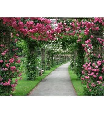 Саджанці плетистих рожевих троянд