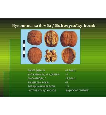 Буковинская Бомба(ПРИВИТЫЙ) 2-х летний