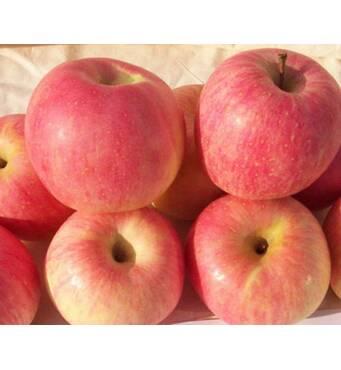 Саджанці яблуні Ятака