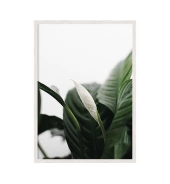 """Постер """"Квіти 05"""" із склом антивідблиску  297x420 мм у білій рамці"""