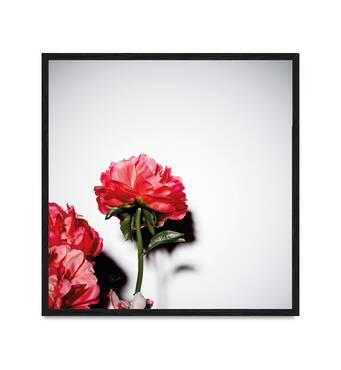 """Постер """"Піони"""" із склом антивідблиску 60  x 60 см в чорній рамці"""