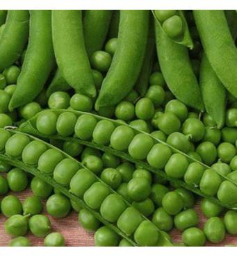 Горох овочевий Киш Миш  (ЕГХ-19) за 20 г
