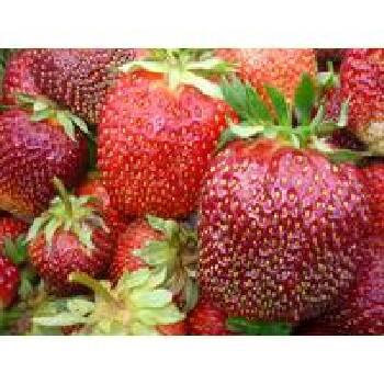 Вирощування саджанців полуниці