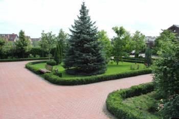 Посадка декоративных деревьев и кустарников