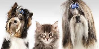 Професійний грумінг (стрижка) собак і котів у Львові та по Україні